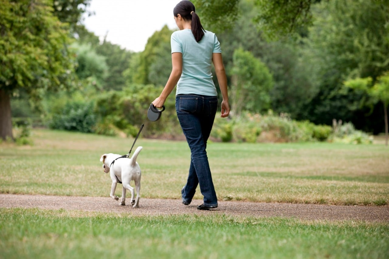 Young Woman Walking Dog In Park