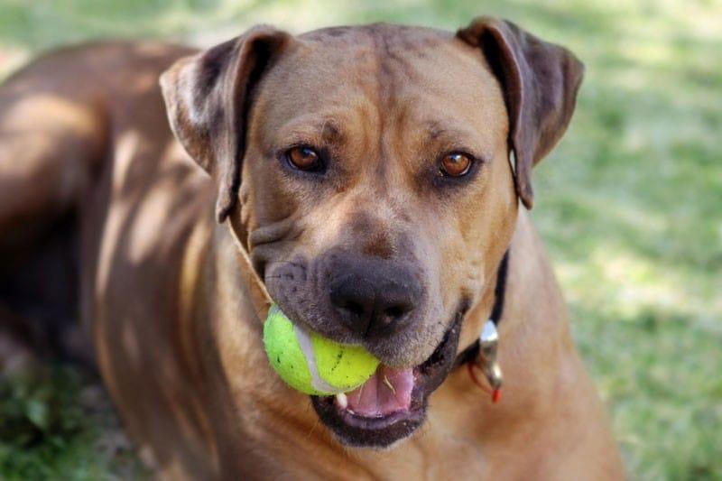Dog at Saluda River Club