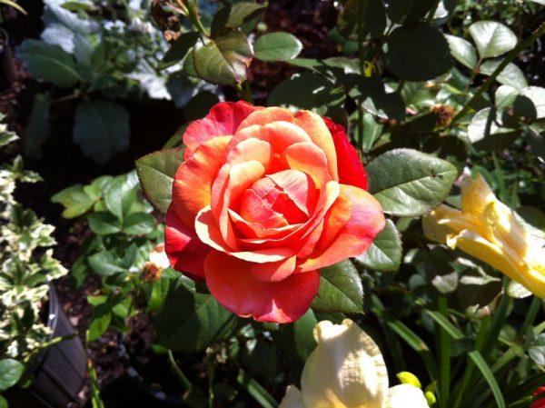 Saluda River Club garden tour